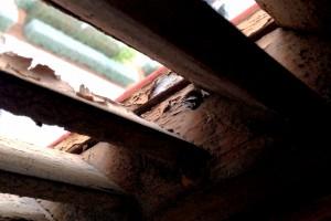 Degradación de madera en carpintería de fachada